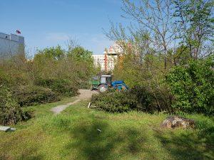 Cimitirului Eroilor din Chisinau, transformat in depozit pentru crengi